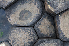 Rock texture in giant causeway Stock Photography