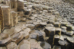 Giant's Causeway columnar basalt Royalty Free Stock Photo