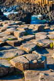 Giant s Causeway detail Royalty Free Stock Photography