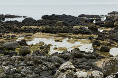Giant`s Causeway Royalty Free Stock Photo