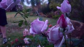 Giant& x27 ; s Rose Garden Image libre de droits