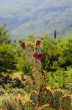 Giant Saguaro in Southern Arizon stock photo