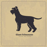 Giant Schnauzer dog silhouette Stock Photos