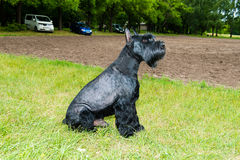 Giant schnauzer seats. Stock Images