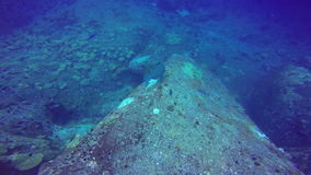Giant school of fish tropical reef, shot in the Red Sea, Sudan underwater shot. stock footage