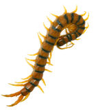 Giant Scolopendra Centipede. Silhouette of a giant centipede Stock Photography