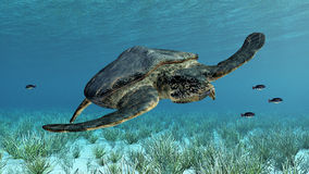 Giant sea turtle Archelon Royalty Free Stock Photo