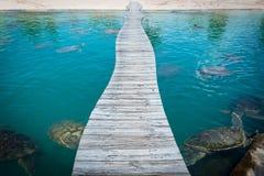 Giant sea turtle swimming stock photos