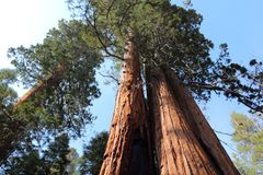 Giant Sequoia National Monument Stock Images