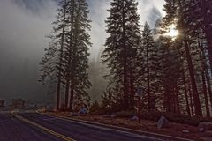 Giant sequoia trees in Yosemite National Park. Giant sequoia trees along the road in Yosemite National Park Royalty Free Stock Photo