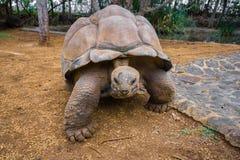 Giant turtles in La Vanille natural park, Mauritius stock photos