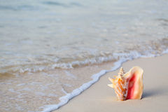 Giant shell on beach. Giant conch shell on tropical sand beach Royalty Free Stock Images