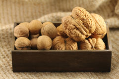Giant and small walnut in shell. On the background of natural burlap Royalty Free Stock Images