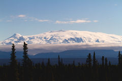 Giant Snowcapped Mountain. A massive 16000 foot snowcapped mountain in the Wrangell St Elias National Park Alaska pokes its head out above a dense forest with Royalty Free Stock Photography