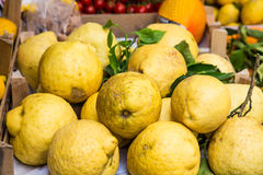 Giant Sorrento Lemons. Huge lemons in a Sorrento market on the Amalfi Coast Stock Photo