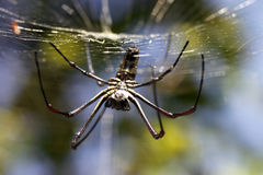 Giant spider Royalty Free Stock Photography