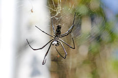 Giant spider. An image of a fierce giant spider in her web stock photos