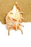 Giant spider conch shell on the sand Royalty Free Stock Photography
