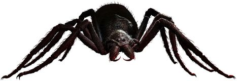 Giant spider 3D illustration. Giant scary hairy spider 3D illustration Stock Photography