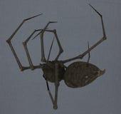 Giant spider Royalty Free Stock Photos