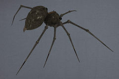 Giant spider Stock Photography