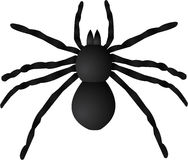 Giant Spider Illustration Stock Photo