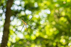 Giant spider on web Stock Photography