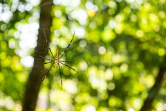 Giant spider on web Royalty Free Stock Photos