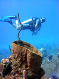Giant sponge and diver. A diver examines a giant barrel sponge, on a shallow sunny dive in the Cayman Islands Royalty Free Stock Image