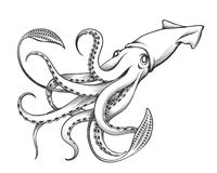Giant Squid Engraving Illustration. Giant Squid drawn in Engraving tattoo style. Vector Illustration vector illustration