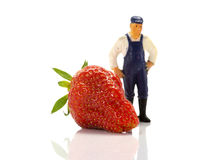Giant strawberrie and the farmer Stock Photos