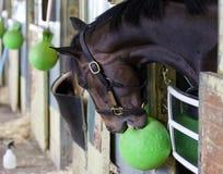 Giant Surprise - Belmont Park stock photos