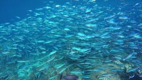 A giant swarm of fish swimming in the sea stock video footage