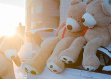 Giant teddy bears with red ribbons sitting on top of the car hood outdoor. Space for text. Love, valentines day concept royalty free stock photo