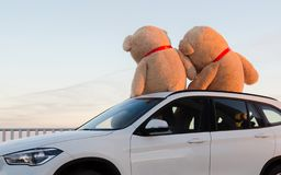 Giant teddy bears with red ribbons sitting on top of the car hood outdoor. Space for text. Love, valentines day concept royalty free stock photos