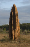 Giant termite mound Royalty Free Stock Photo