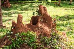 Giant termite mound. Termite mound in bush of Sri Lanka Royalty Free Stock Images