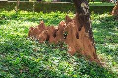 Giant termite mound Royalty Free Stock Images