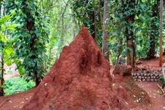 Giant termite mound. Termite mound in bush of Sri Lanka Stock Photo