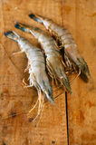 Giant tiger raw shrimps prawns Royalty Free Stock Photos