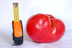 Giant tomato Stock Photo