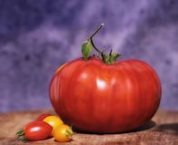 Giant tomato. In close-up with small tomatoes Royalty Free Stock Images