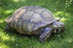 Free Giant Tortoise Stock Photos - 97168513