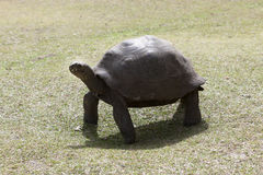 Giant tortoise at Curieuse island, Seychelles Stock Image