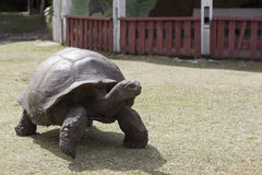 Giant tortoise at Curieuse island, Seychelles Stock Photos