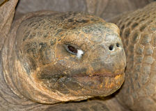Giant tortoise head Stock Photos