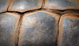Giant Tortoise Shell Royalty Free Stock Image