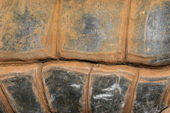 Giant Tortoise Shell Pattern. The well worn and grooved pattern of an old gian tortoise. An abstract tile pattern Stock Photo