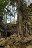 Giant tree covering the stones of Ta Prohm temple in Angkor Wat Royalty Free Stock Photos
