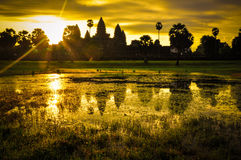 Giant tree covering Ta Prom and Angkor Wat temple, Siem Reap, Ca Royalty Free Stock Image